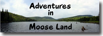 Adventures in Moose Land
